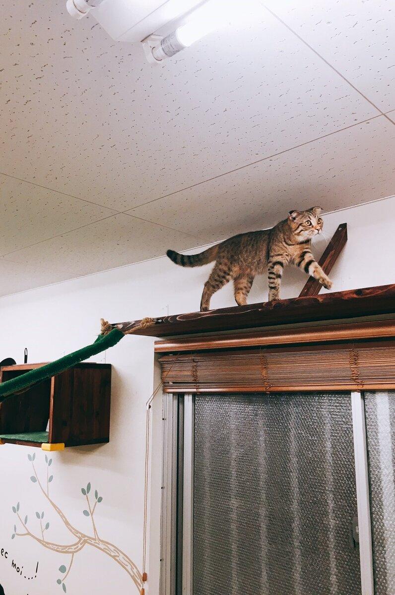 猫カフェにあにゃあ